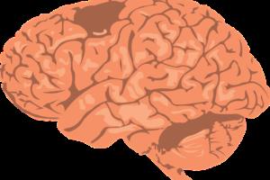 前頭葉の萎縮