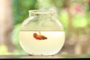 金魚鉢のように狭い世界